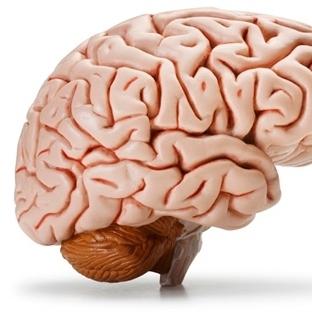 Sıfırdan Beyin Üretildi