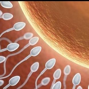 Baba Adayları İçin Sperm Sayısı ve Kalitesini Artt