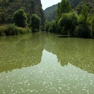 Çal Kanyonu