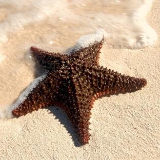 Karaya Vuran Deniz Yıldızları