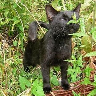 Kediler İçin Zararlı Bitkiler