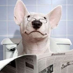 Köpeğe Gazete İle Tuvalet Eğitimi