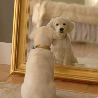 Köpeklerde Sivilce