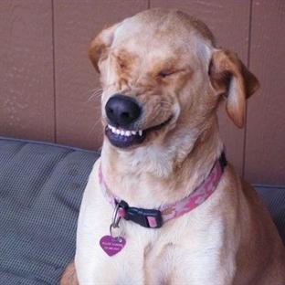 Köpeklerde Ters Hapşırık