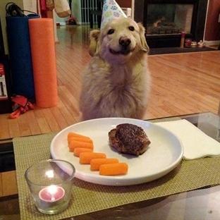 Mutluluğun Resmi Sırıtan Köpekler
