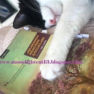 Okuma Halleri, Fotoğraflarla - Jakaranda Ağacının