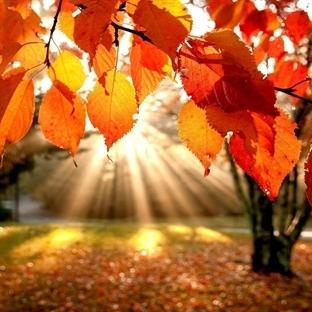Sonbaharda Ne Yapılır?