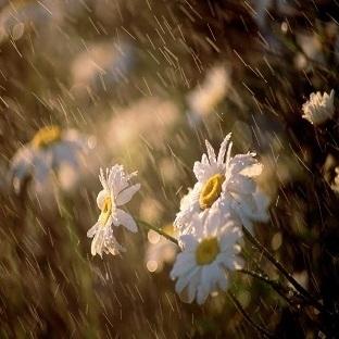 Yaz Yağmurları!!!
