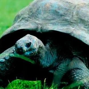 183 Yaşındaki En Yaşlı Kaplumbağa
