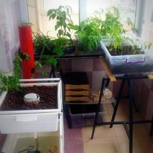 3 m2 Balkonda Yapılan Tarım ve Hayvancılık