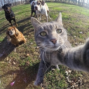 Çektiği Başarılı Selfie'lerle Adını Duyuran Kedi