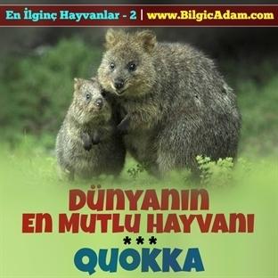 Dünyanın En Mutlu Hayvanı - Quokka
