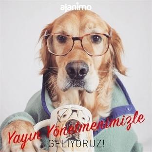 Hayvan Gibi Haber Sitesi