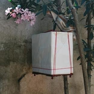 Kuşların Hatrına Sergisi Daire Galeri'de