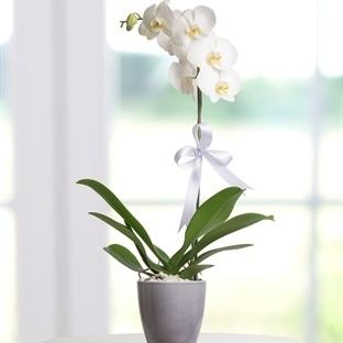 Orkide Çoğaltma Nasıl Yapılır?