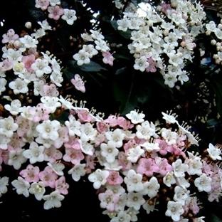Zarif Kış Çiçekleri