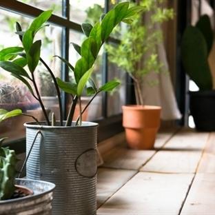 Evinizde Soluduğunuz Havayı Temizleyen Bitkiler