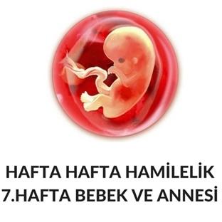 Hafta Hafta Hamilelik - Hamileliğin 7. Haftası
