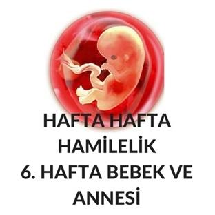 Hafta Hafta Hamilelik- Hamileliğin 6. Haftası