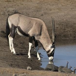 Hayvanları İzleyerek Su Bulmak