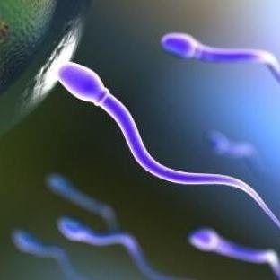 Kaliteli Sperm ve Yumurta İçin...
