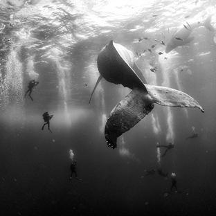 2016 Dünya Basın Fotoğrafları Yarışması Kazananlar
