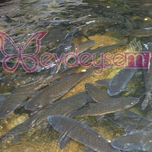 Balığın Besin Değerleri ve Faydaları Nelerdir?