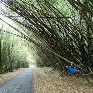 Bambu Katedrali