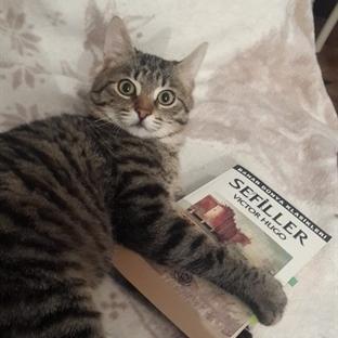 Okuma Halleri, Fotoğraflarla - Sefiller / Victor H