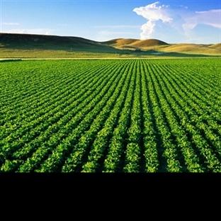 Tarımdan Para Kazan