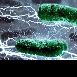 Bakterilerden Güç Elde Edebilen Pil Yapıldı