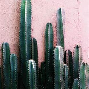 Dekorasyonda Bitki Modası