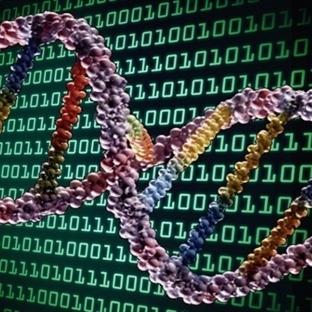 DNA'ya Kedi Resmi ve Video Yüklemeyi Başardılar