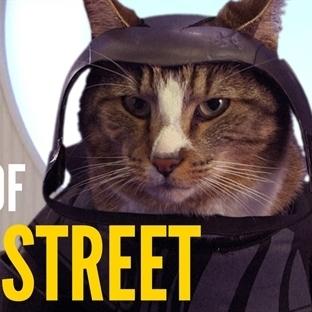 Kediler popüler filmlere yerleştirilirse