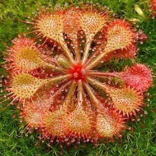 Muhteşem Görünen 5 Etçil Bitki