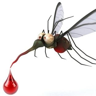Sivrisineklerden Geçen Ölümcül Kalp Kurdu