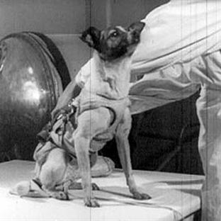 Uzaya Gönderilen İlk Köpek Laika'nın Üzücü Öyküsü