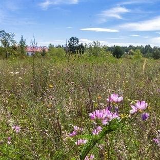 Schutzbedürftiges Biotop im Gleislager Neuaubing