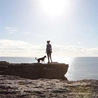 Reisen mit Hund - So geht's!