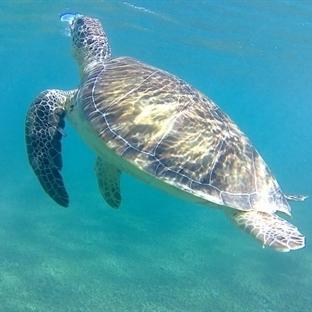 Zauberhafte Unterwasserwelt von Mexiko