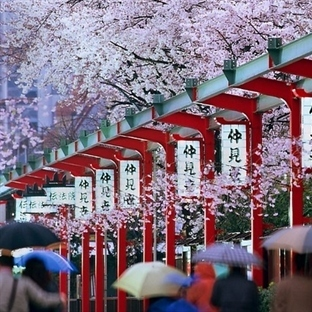 10 Maddede İlginç Japon Gelenekleri