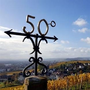 Rheingau – Dem Riesling auf der Spur