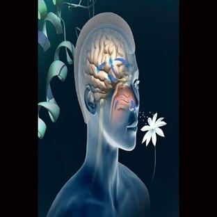 Koku duyusu neden önemlidir? Hafıza ile ilişkisi