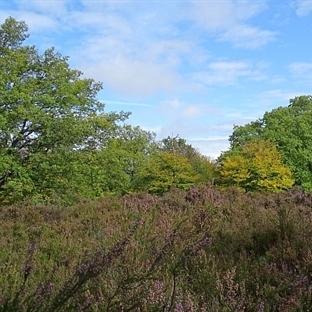 Mehlinger Heide - die größte Heide Süddeutschlands