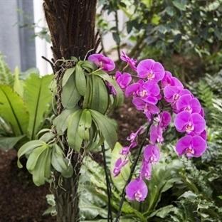 Tropischer Garten Slowenien - im Orchideenparadies