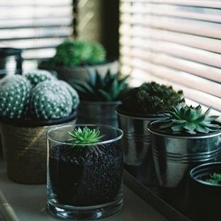 Bakımı kolay dekoratif bitkiler:Kaktüs ve Sukulent