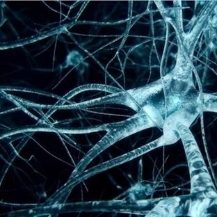 Bilinç Beynin Neresinde?