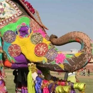Dünya'nın Dikkat Çeken ve Eğlendiren 6 Festivali
