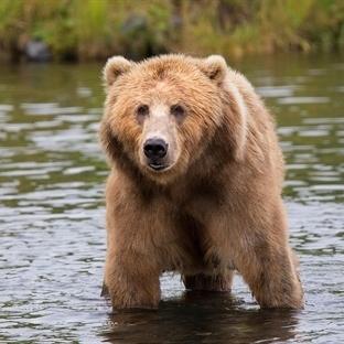 Hayvanlarla İlgili Çok Şaşıracağınız Bilgiler