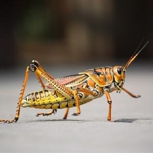 Böcekler nasıl duyar